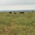 Emergenza cinghiali: il Parco Alta Murgia chiede azioni urgenti e impegno