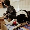 H2lOve e AcchiappaSorrisi con 'Denny il cane' insegnano ai bambini a rapportarsi agli animali