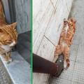 """""""Rapito """" il gatto di quartiere di piazza Marena, a Bitonto"""