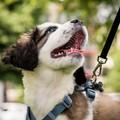 4 Zampe in passerella: sfilata di cani di razza e meticci a Bitonto