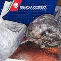Al setaccio la filiera della pesca: 7 quintali di merce sequestrata