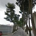 Manutenzione dei pini secolari: via Traiana chiusa a traffico e pedoni il 21 e 22 maggio