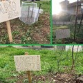 Tre nuovi nati a Bitonto: piantato un albero per ognuno di essi