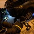 Gattino incastrato nell'auto a Bitonto: i pompieri lo liberano fra gli applausi