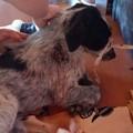 Buttato come spazzatura a Bitonto e sbranato: cane salvo per miracolo