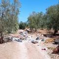 Nelle campagne tra Bitonto e Santo Spirito è vera emergenza ambientale