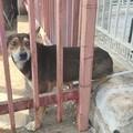 Cane intrappolato in una ringhiera: salvato dai Vigili del Fuoco