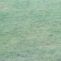 Il manto erboso dello stadio in pessime condizioni: l'USD Bitonto emigra a Bitetto