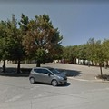 Lecci rinsecchiti a Palombaio, Forza Italia: «Abbandonati come tutta la frazione»