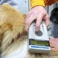Domenica tutti in villa a Bitonto per microchippare cani e gatti di proprietà