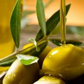Il mondo olivicolo italiano a Bari per tracciare il futuro del settore
