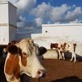 """Coldiretti Puglia: «""""Spariti"""" 92mila animali in cinque anni»"""