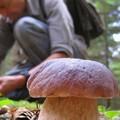 A Bitonto un corso per la raccolta dei funghi