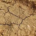 La siccità piega gli uliveti di Bitonto. Confagricoltura chiede l'intervento della Regione