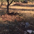 Bandi regionali per l'agricoltura fermi, Forza Italia: «Disastro continuo»