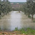 Campagne flagellate dal maltempo: a Bitonto il Comune invita gli agricoltori a segnalare i danni