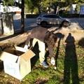 I volontari di VogliAmo Bitonto Pulita al lavoro nelle aree verdi di via Scoppio