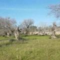 Nuovi compiti all'Arif, Damascelli: «Pessima gestione a trazione clientelare»