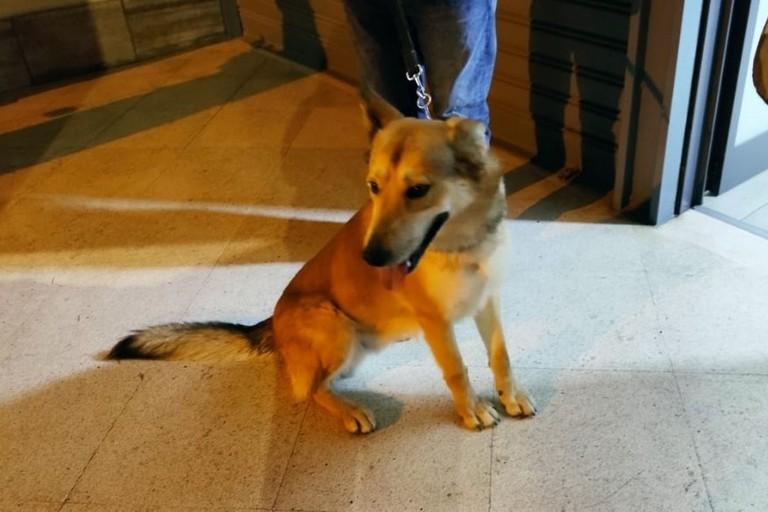 Cane smarrito recuperato dalla ASL