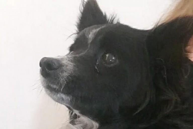 Renesde, la cagnolina che ha bisogno di aiuto