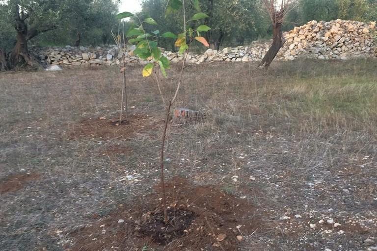 Gli alberelli appena piantati jfif