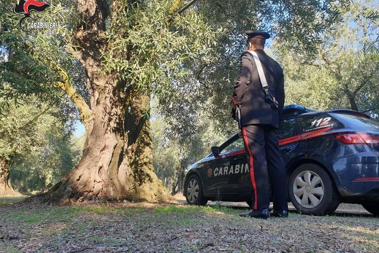 I Carabinieri nelle campagne di Bitonto per il furto di olive