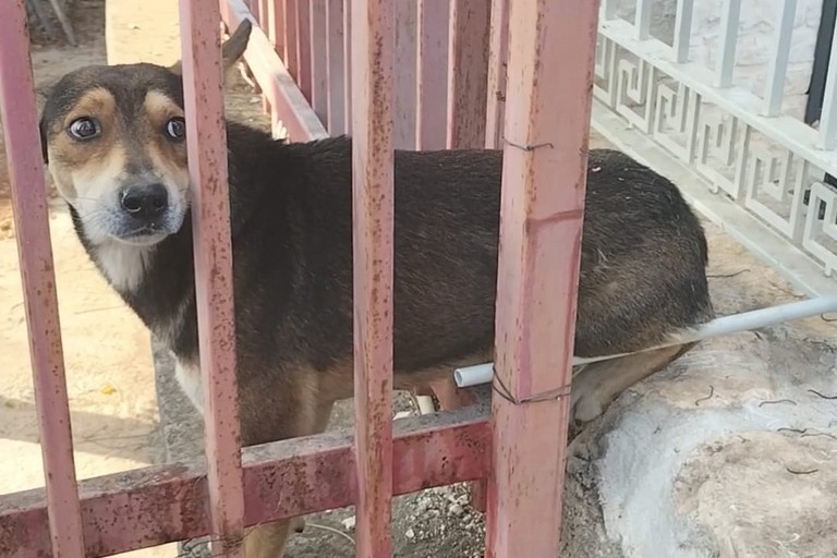 Il cane salvato dai Vigili del Fuoco