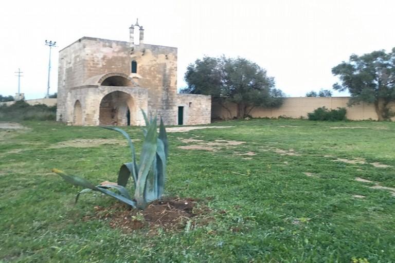 Lagave piantata davanti alla chiesa dellAnnunziata