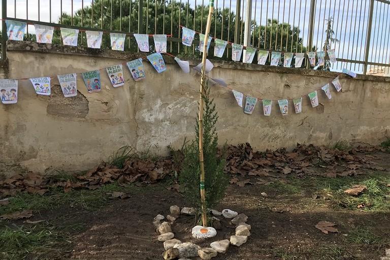 Lalbero piantato nella scuola Caiati