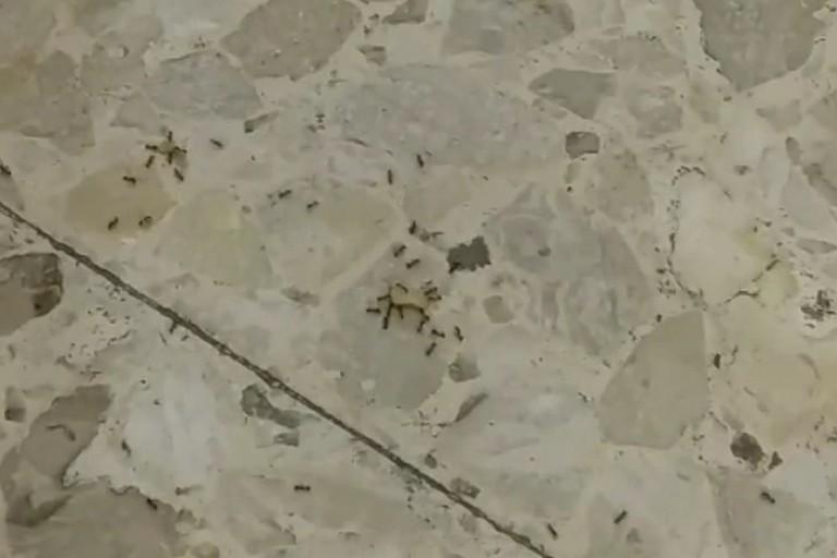 Le formiche padrone dellospedale di Bitonto