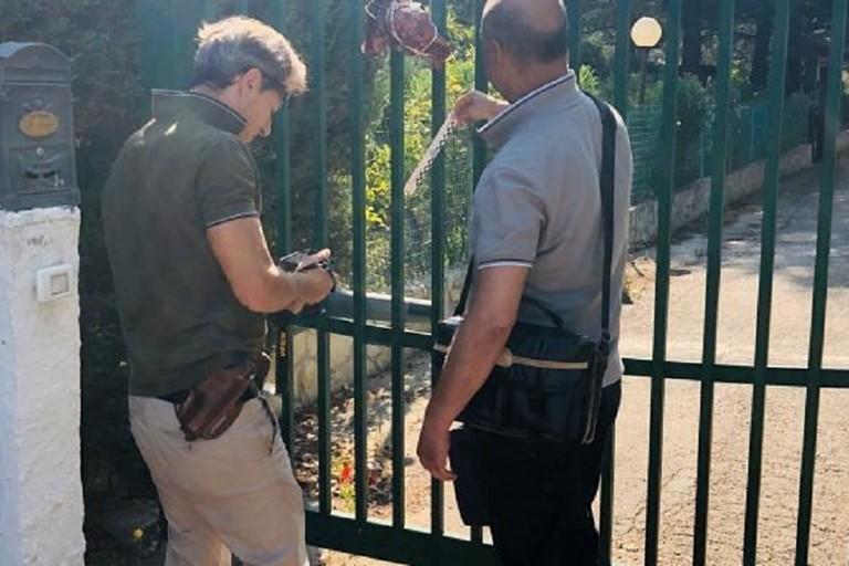Le teste di capretto analizzate dagli ispettori di Polizia di Bitonto. <span>Foto immediato.net</span>