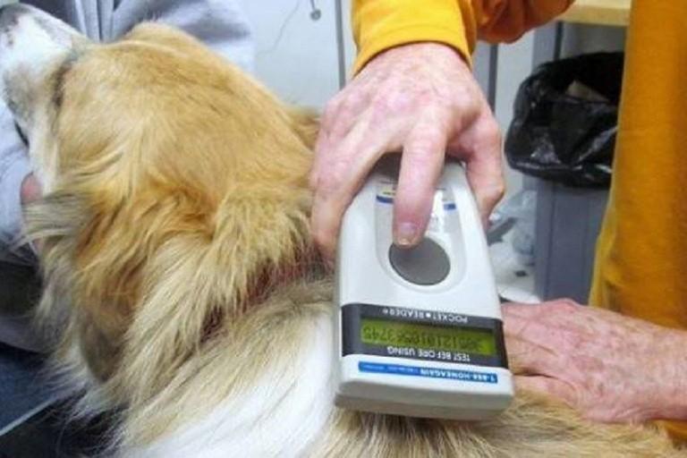 Microchippatura cani